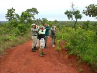 Group birding in Cerrado (native grasslands).