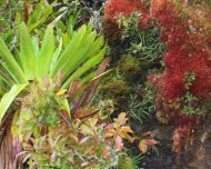 Bromeliads and mosses