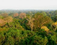 Canopy view of Amazonia Rainforest from a 42 meters observation tower near Manaus, Amazonas state.