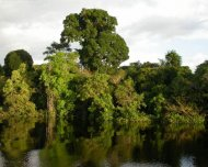 Igapó (black water inundated forest in Amazon)