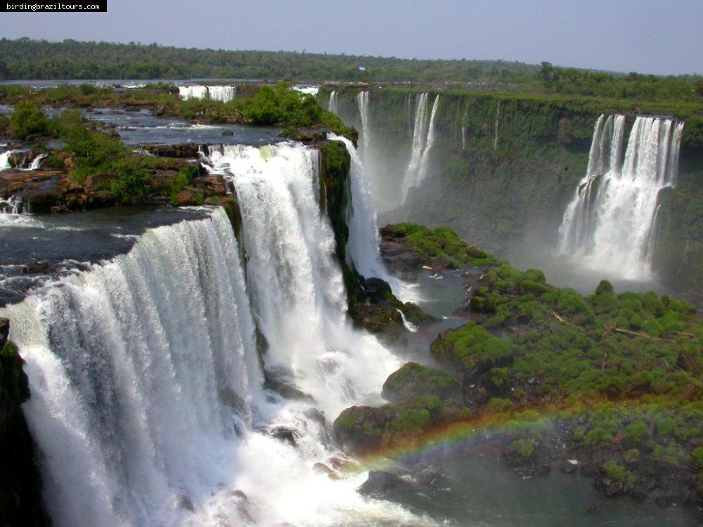 Birding Brazil Tours Why Visit Brazil