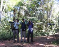 Andy guiding in the rich Atlantic Rainforest of Intervales (SE Brazil).
