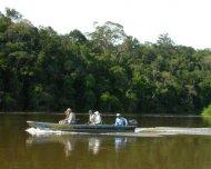 Birding in the Rio Roosevelt, Rondônia.