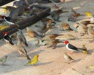 Bird feeder at Pantanal