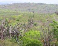 Caatinga habitat