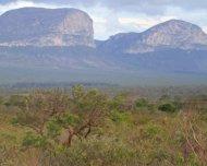 Campo rupestre habitat with Chapada Diamantina in the back.