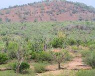Varied types of Caatinga