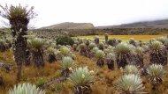 Paramo of Natural National Park Los Nevados