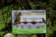 ProAves Las Tangaras Reserve