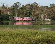 """Palafita house (""""stilt house"""") in the Amazon."""