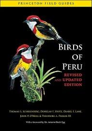 Birds+of+Peru